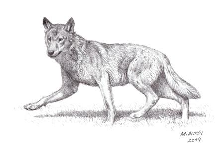 lobo al trote 3 baja res sign