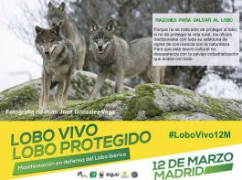 01-Sticker-LoboVivo
