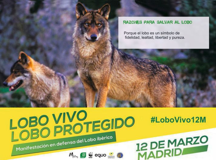 02-Sticker-LoboVivo