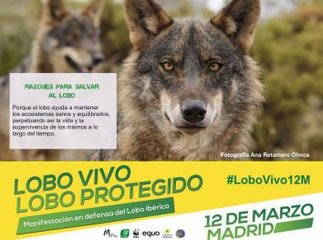 03-Sticker-LoboVivo