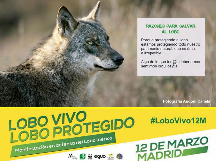 04-Sticker-LoboVivo