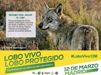 05-Sticker-LoboVivo