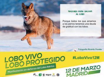 06-Sticker-LoboVivo