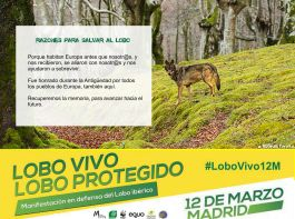 07-Sticker-LoboVivo
