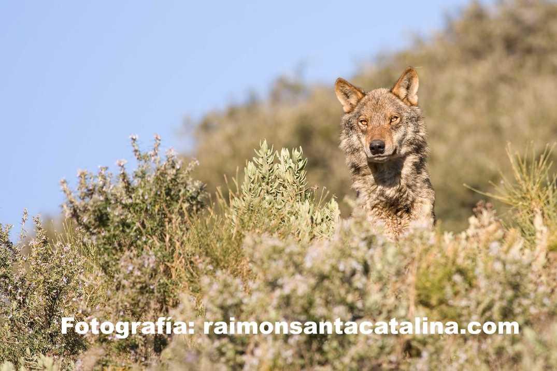 Raimon Santacatalina2